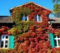 Wilder Wein zeigt sich im Herbst in intensivem Rot, das sowohl an historischen Gebäuden, als auch am modernen Einfamilienhaus zur Geltung kommt. Bild: fotolia