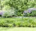 Der New German Style: Gartenszenen, die wie zufällig gewachsen und doch unwirklich dicht und vielseitig aussehen. Bild: BGL
