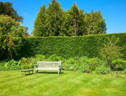 Immergrüne Hecken bieten einen natürlichen Sichtschutz. Bild: fotolia