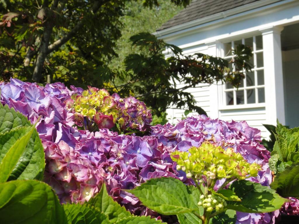 """Alte Gartenkultur wiederentdecken: """"Zwischen Rosen und Hortensien findet man dort ein Garten- und Naturerlebnis, wie viele es sich wünschen"""", so Reckmann. Bild: BdB"""
