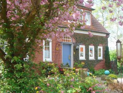 Auch in deutschen Gärten ist die Frühlingspracht der aus Asien stammenden Zierkirsche beliebt. Landschaftsgärtner setzen den Frühblüher gern an exponierter Stelle als Hausbaum ein. Bild: BGL