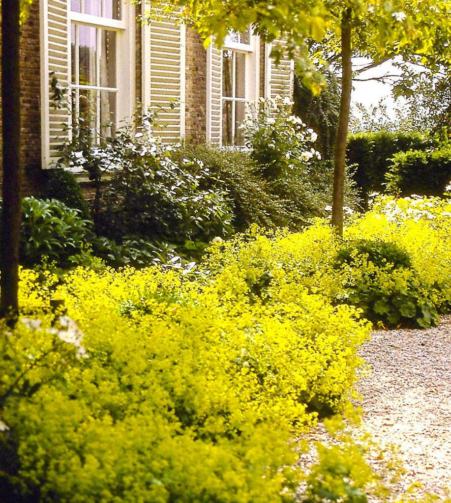 Am Vorgarten kommt keiner vorbei! Ihn sehen nicht nur die Besitzer, wenn sie jeden Tag das Haus verlassen und wieder zurück kommen. Umso schöner, wenn der Vorgarten einladend ist! Dann wirkt er wie ein freundlicher Willkommensgruß. Bild: PdM