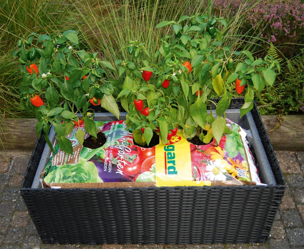 Mit dem Bio Mini-Garten von Floragard muss die Blumenerde nicht umgefüllt werden. Der Erdensack kann direkt bepflanzt werden. Bild: tdx/Floragard