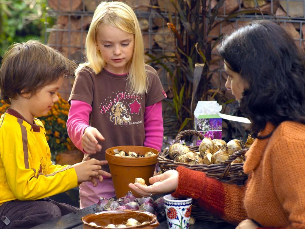 Bei Blumenzwiebeln oder Pflanzensamen geraten Kinder oft ins Staunen, wenn sich z.B. eine leblose Knolle in eine blühende Narzisse verwandelt. Bild: tdx/IZB