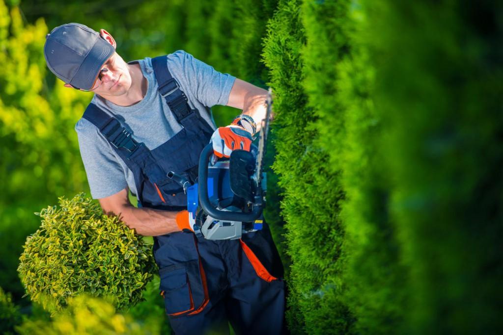 Immergrüne Hecken sind in der Regel einfach zu pflegen. Bild: fotolia