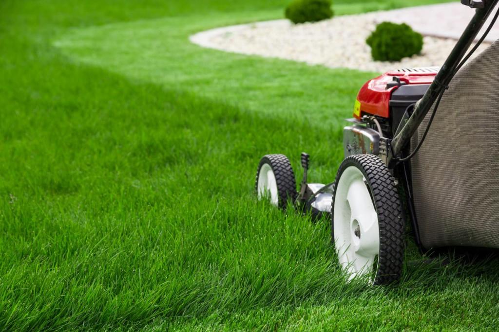 Die Schnitthöhe hat Einfluss auf das Wachstum und die Qualität des Rasens. Bild: fotolia