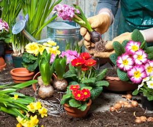 Bereits ausgetriebene und blühende Pflanzen sorgen im Frühling unverzüglich und unabhängig vom Wetter für einen farbenfrohen Garten. Bild: tdx/fotolia
