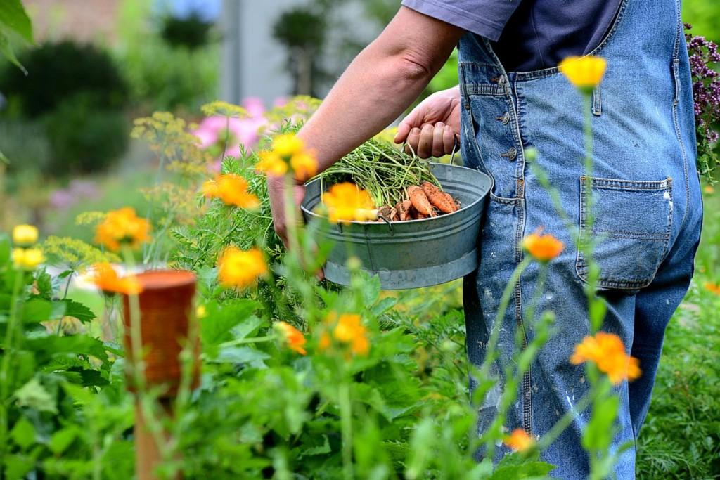 Auch Gemüse darf im Bauerngarten nicht fehlen. Bild: fotolia