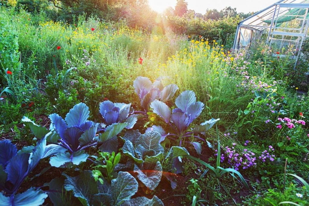 Ein Bauerngarten ist Lebensfreude pur. Bild: fotolia