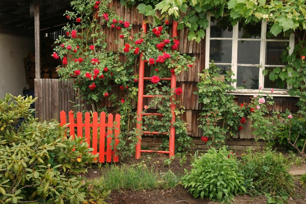 Kletterrosen am Gartenhaus der der Fassade wissen zu gefallen. Bild: fotolia