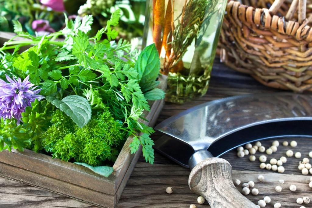 Heute dienen Kräutergärten dazu den Haushalt immer mit frischen Kräutern zu versorgen. Bild: fotolia