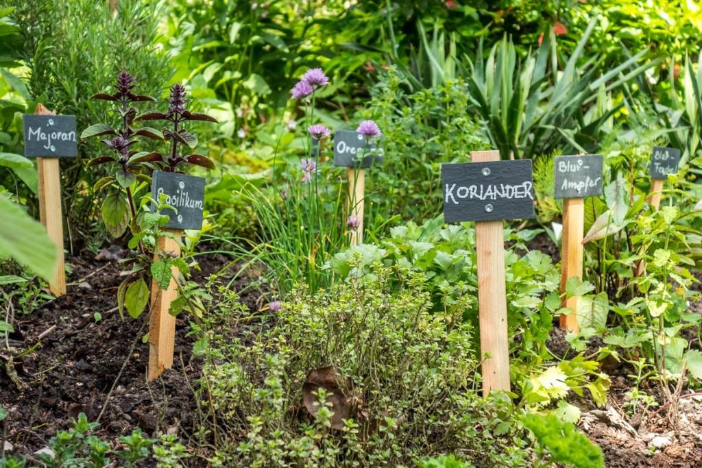 Bei der Planung eines Kräutergartens, ist die Überlegung vorrangig welche Kräuter man pflanzen möchte. Bild: fotolia