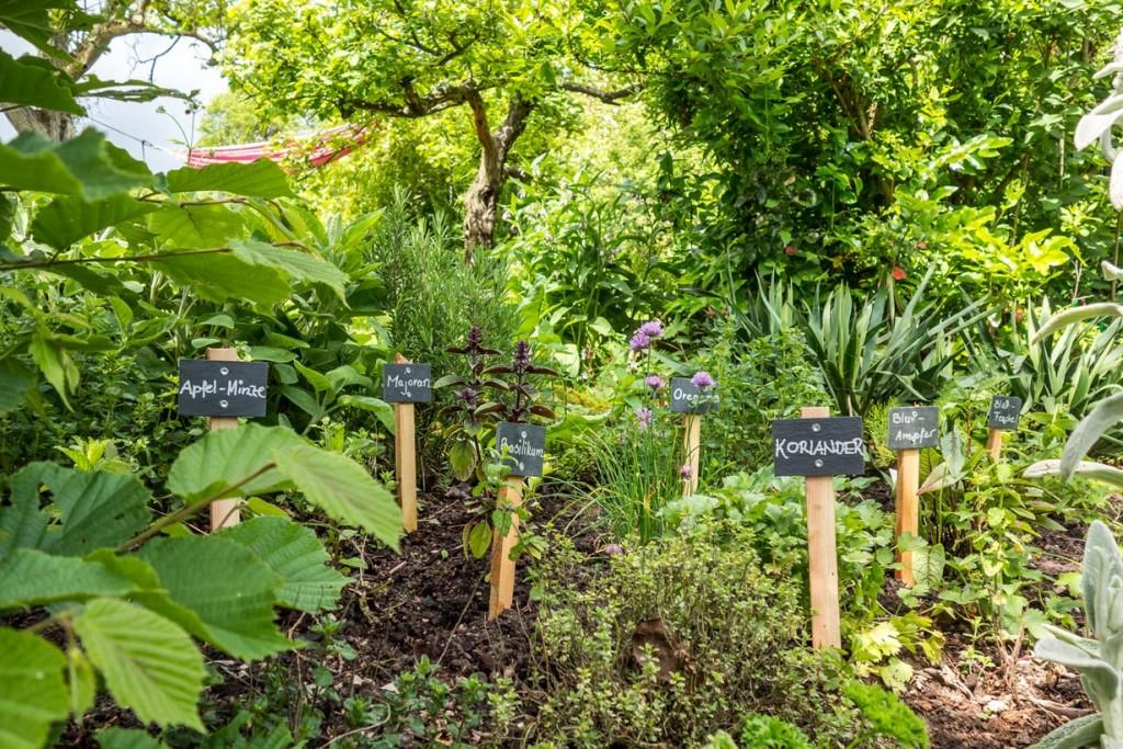 Mediterrane Kräuter sind sehr beliebt und wachsen auch in unseren Kräutergärten hervorragend. Bild: fotolia