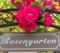 Ein Rosengarten überrascht mit großartiger Blütenpracht. Bild: fotolia