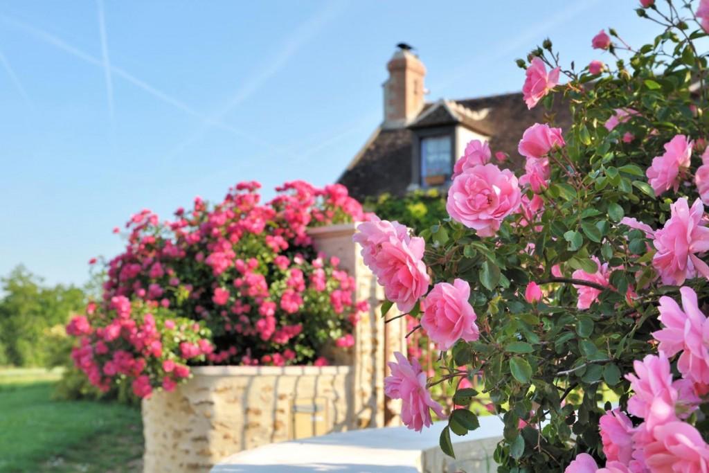 Rosen setzen an unterschiedlichsten Stellen Farbakzente. Bild: fotolia