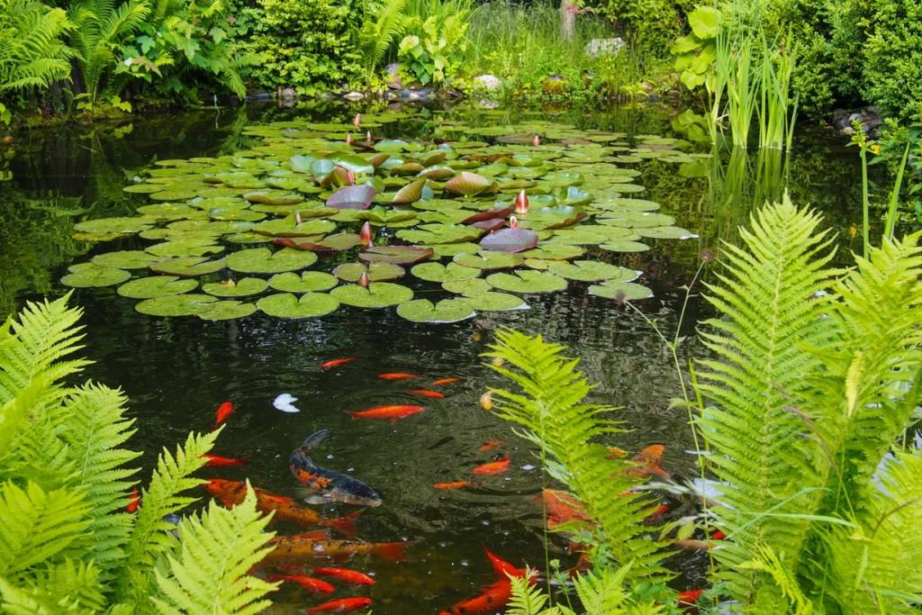 Die fische im gartenteich erwachen for Fische gartenteich arten