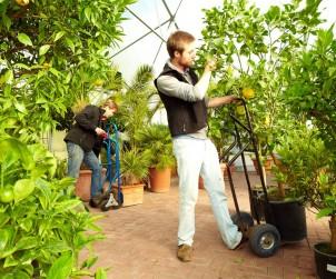 Viele Gärtnereien bieten einen Überwinterungsservice, holen empfindliche Kübelpflanzen ab und bringen sie gesund und kräftig im Frühjahr zurück. Bild: tdx/Das grüne Medienhaus