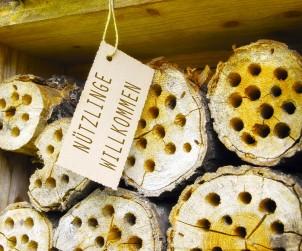 Nisthilfen für Wildbienen lassen sich kinderleicht selbst anfertigen. Dazu werden Brutröhren mit einem Durchmesser zwischen 4 und 8 mm und einer Tiefe von 4 bis 8 cm in abgelagertes Holz gebohrt. Anschließend die Nisthilfe an einem trockenen, sonnigen Ort aufstellen und schon bald werden die Wildbienen einziehen. Bild: tdx/Simone Andress