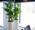 Besonders elegant wirken zwei Hydrokultur-Gefäße mit gleichen Pflanzen, die mit etwas Abstand zueinander aufgestellt werden. Bild: tdx/Das Grüne Medienhaus