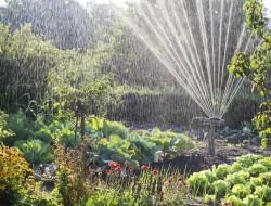 Der Rasensprenger sollte dem Rasen und unempfindlichen Gehölzen vorbehalten bleiben. Bild: fotolia