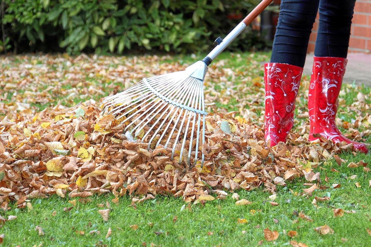 Der Herbst macht keinen Spaß, wenn man das Laub von Nachbars Baum im eigenen Garten zusammenrechen muss. Wehren können sich die Betroffenen nur, wenn die dadurch entstehende Laubmenge auf dem eigenen Grundstück erheblich höher ausfällt als auf den Nachbargrundstücken. Bild: Fotolia