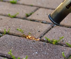 Zwischen Steinplatten auf Wegen und Terrassen lässt sich Unkraut in der Regel mit mit einem Fugenkratzer entfernen. Bei größeren Flächen geht es alternativ mit einem Gasbrenner in Stabform. Wichtig ist es dabei immer einen Eimer Löschwasser bereitzustellen. Bild: tdx/fotolia